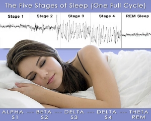 sleep_stages300.jpg