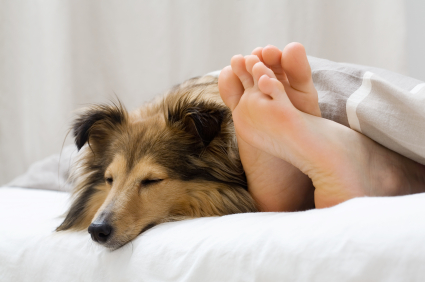 dog-sleeping-in-bed-with-owner