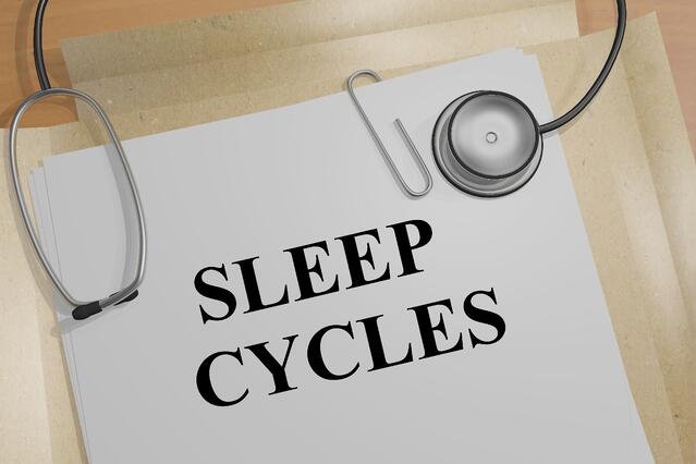 What are the different sleep cycles?