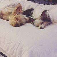 Personal_Sleep_Study_Dogs_in_Bed-431571-edited.jpg