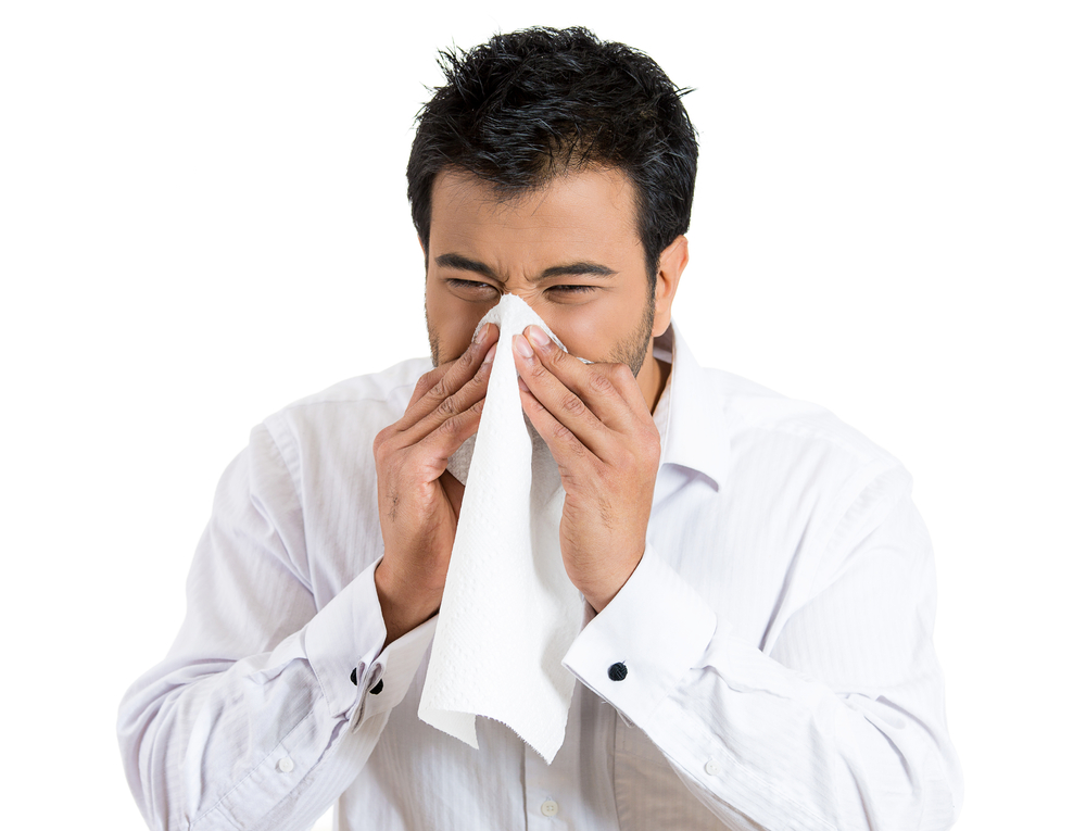 Closeup portrait of sick young man student or worker with allergy or germs cold, blowing his nose with kleenex, looking miserable unwell very sick, isolated on white background. Flu season, vaccine,