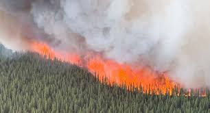 The smoke from wildfires can be dangerous to inhale, especially if you have respiratory troubles.
