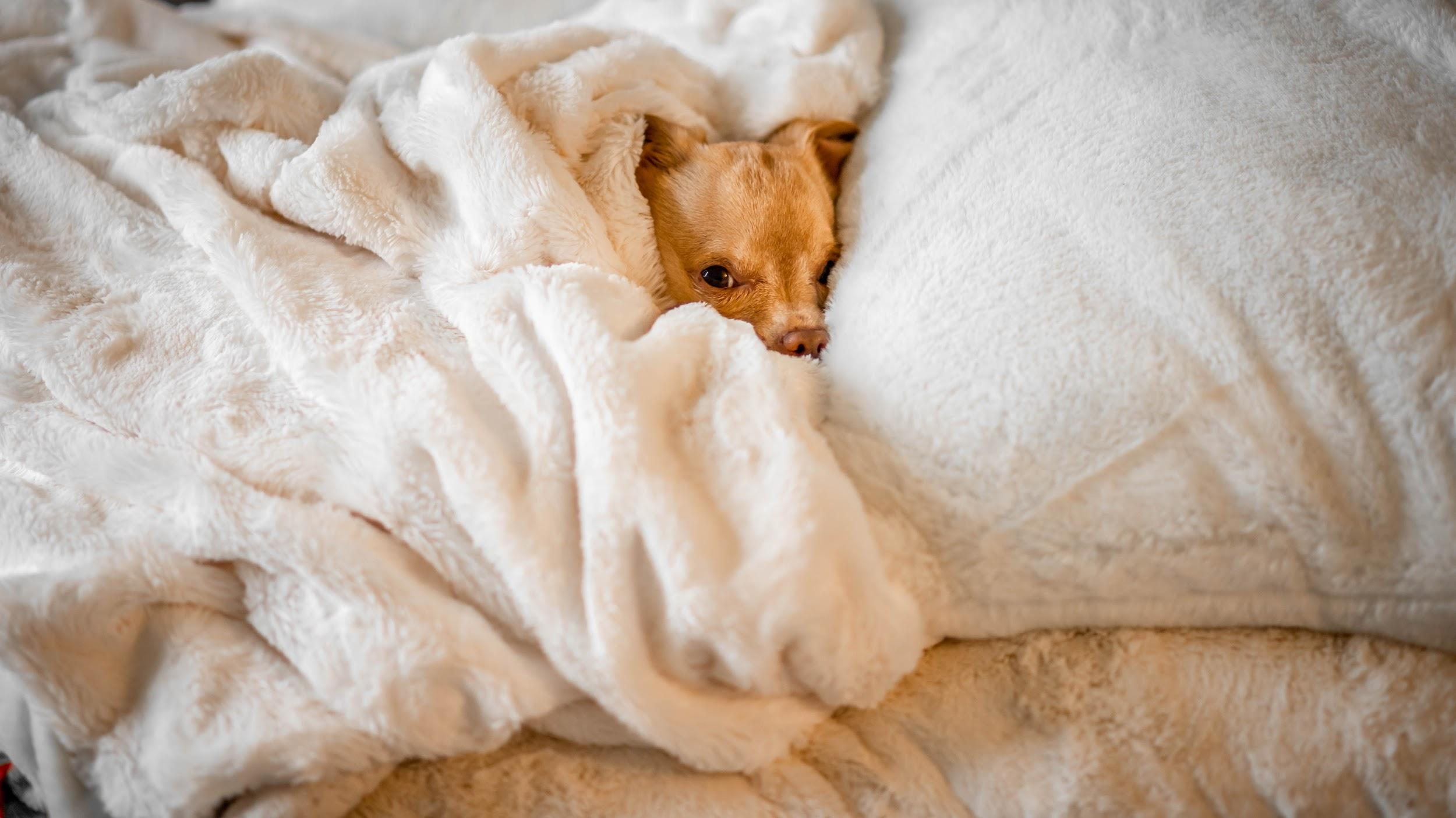 Oh… I thought this was my bed! Photo by Vlad Tchompalov on Unsplash