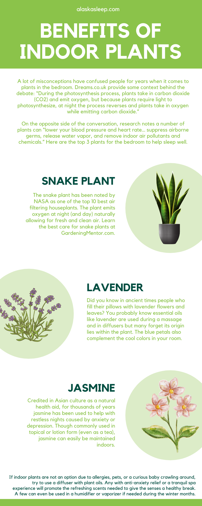 Indoor Plants and Their Effect on Your Sleep