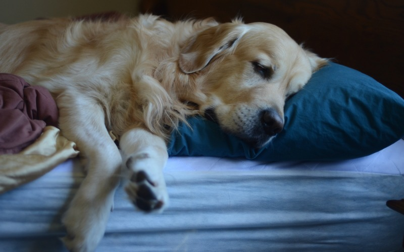 Everyone's Sleep Routine is Off, even Your Pets